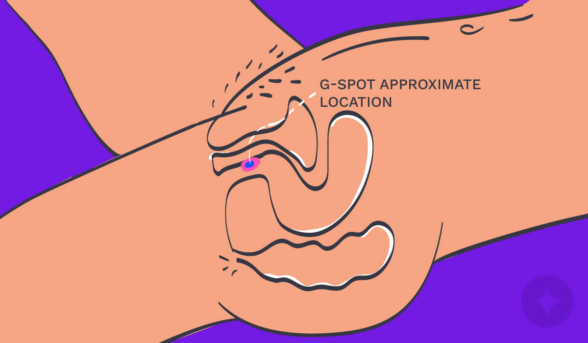 Vulva anatomy: A diagram showing the approximate location of the G-Spot